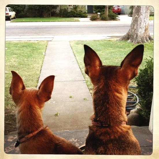 guardians of the front porch.
