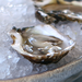 From Shopping to Shucking: All About Oysters