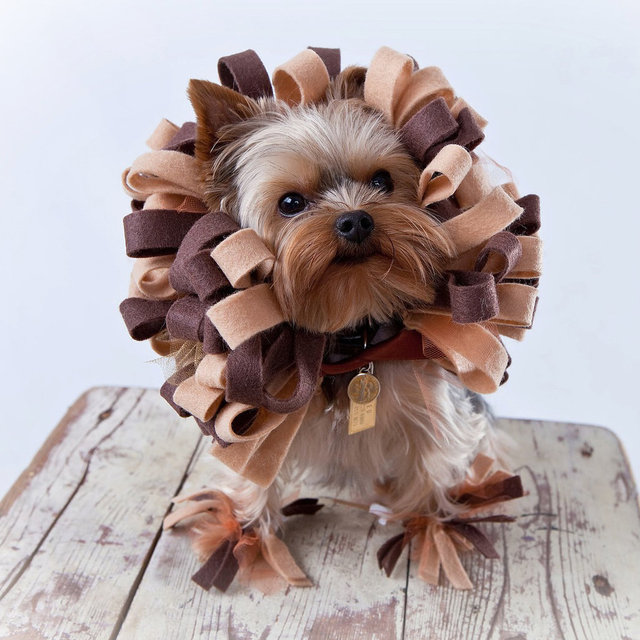 Cheap DIY Pet Costume Ideas