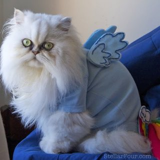 My Little Pony Cat Costume