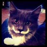 Movember Mustache Pet Gifts