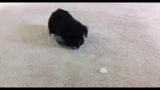 Sunday Funday Video: Puppy vs. Ice Cube