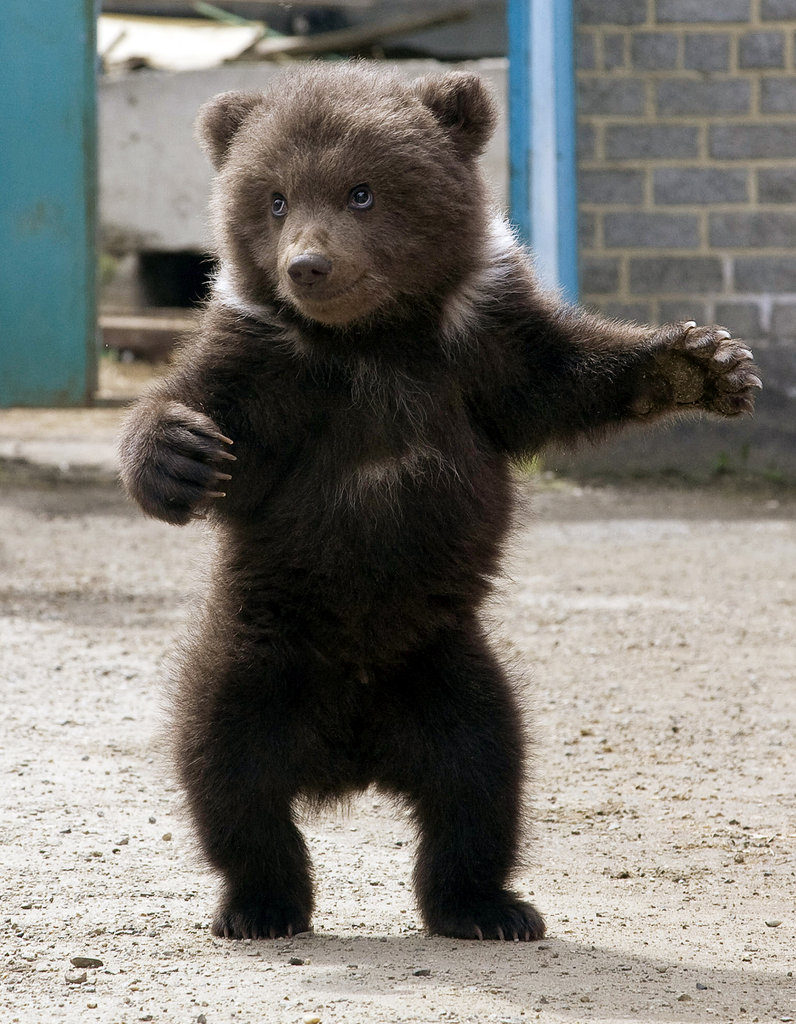 This little cub appeared ready to receive a bear hug!