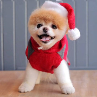 Boo the Pomeranian Holiday Video
