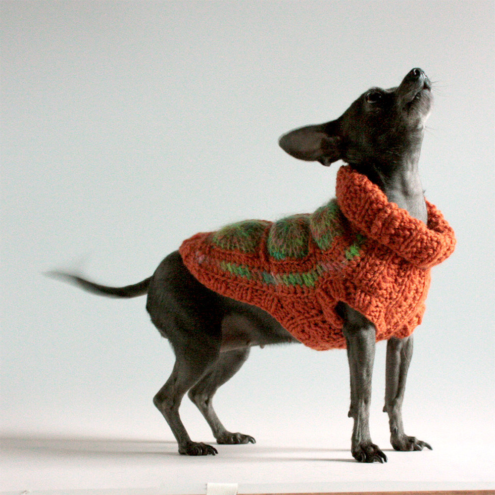Free Crochet Granny Square Dog Sweater Pattern