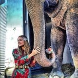 Nicole Richie took a moment to pose with an elephant.  Source: Twitter User NicoleRichie