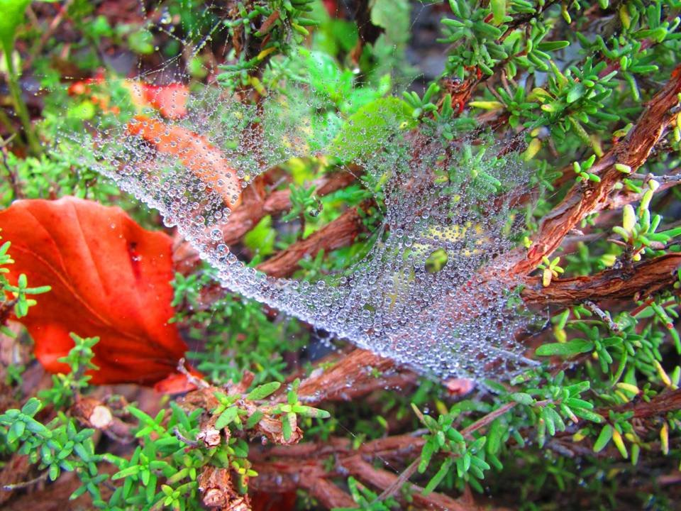 Spiderweb in the area Wasserfallen - BL - Switzerland