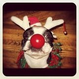 Here's Rudolph!