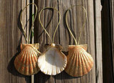 Seashell Ornaments