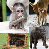 Sweet Baby Zoo Animals to Ring in the New Year