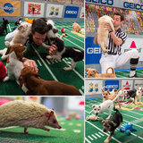 Ruff and Tumble: The Best Pictures From Puppy Bowl IX