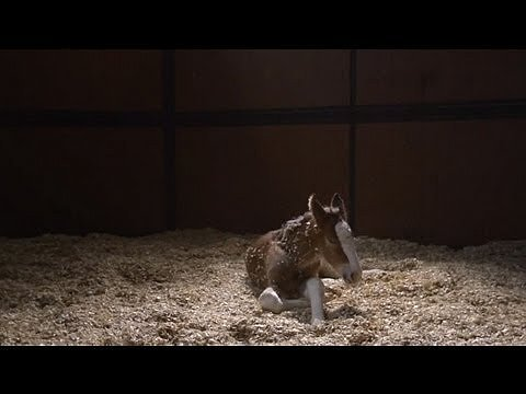 "Budweiser: ""The Clydesdales: Brotherhood"""
