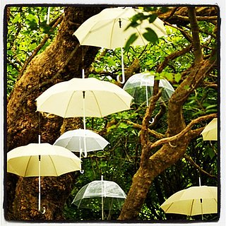 Cool Umbrella Picture