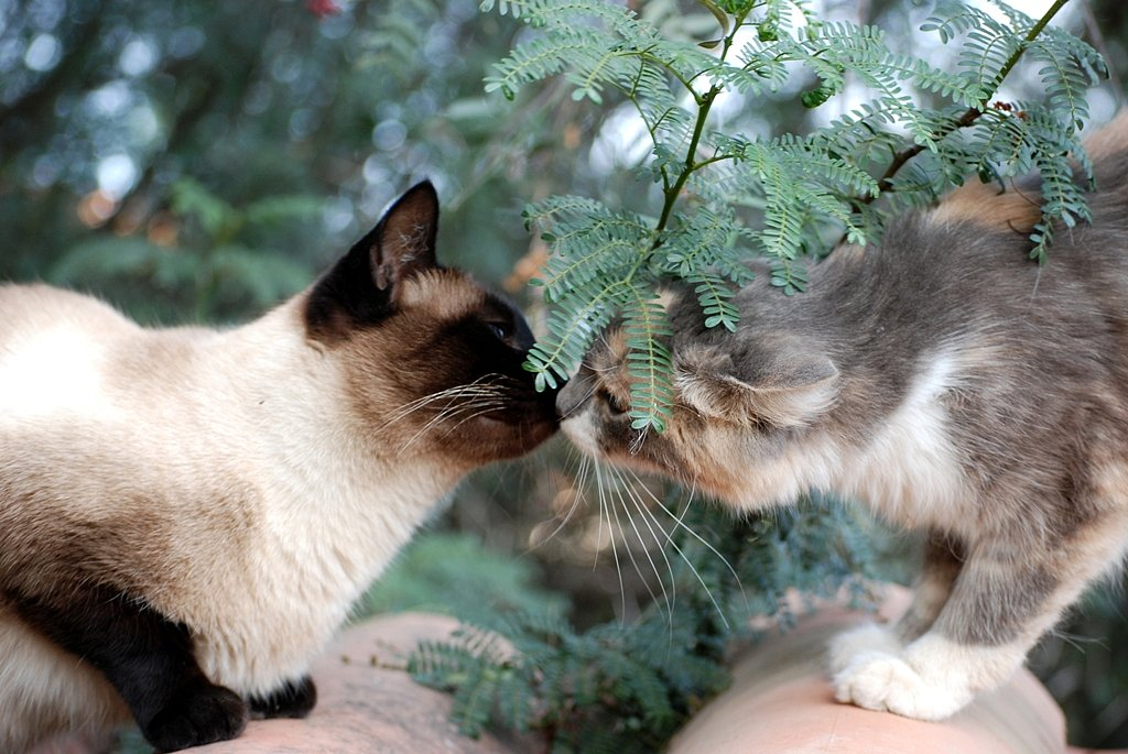 Kitty Kiss