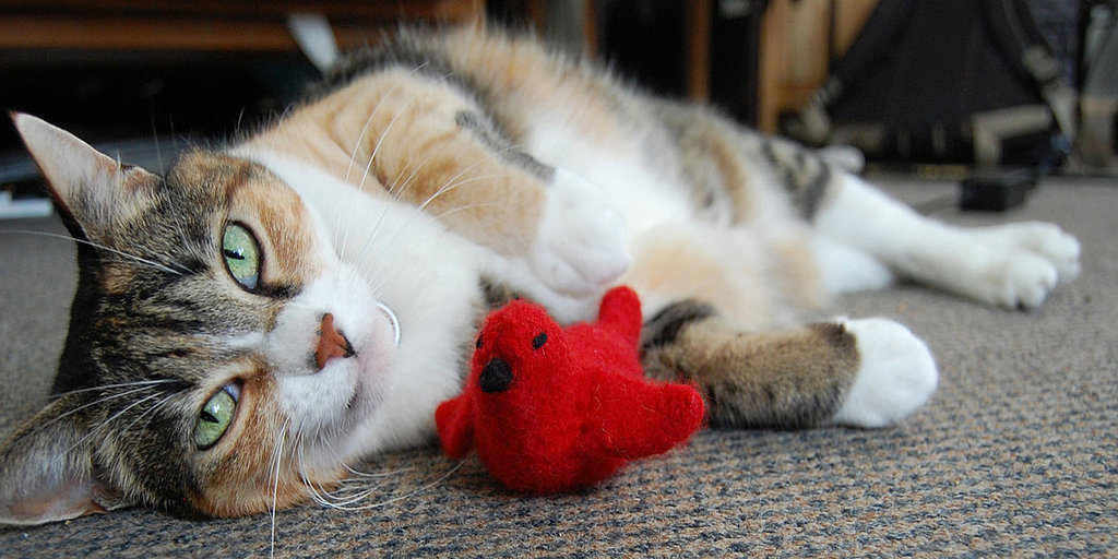 From Functional to Wacky, Cat Products to Keep Kitty Happy