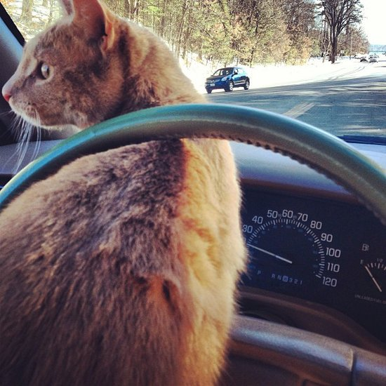 Excuse me, no one likes a backseat driver. Source: Instagram user samanthastiletto