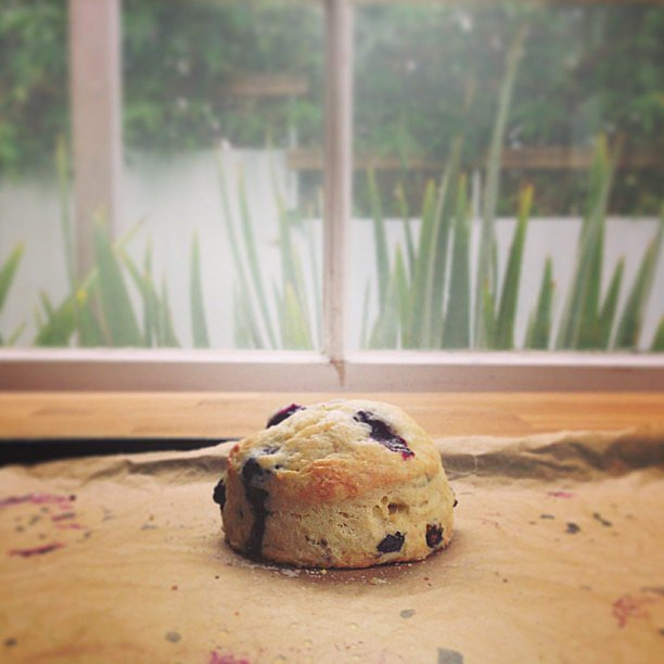 Blueberry Scone