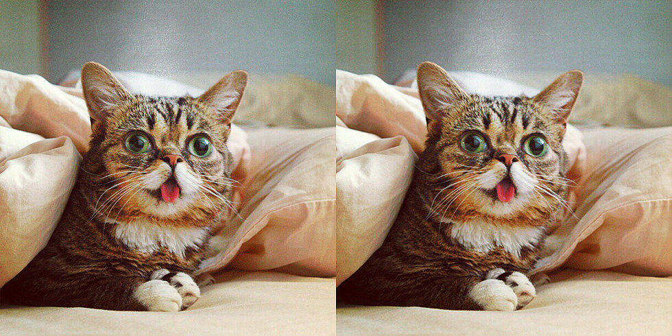 Film Sensation: Lil Bub Heads to Tribeca