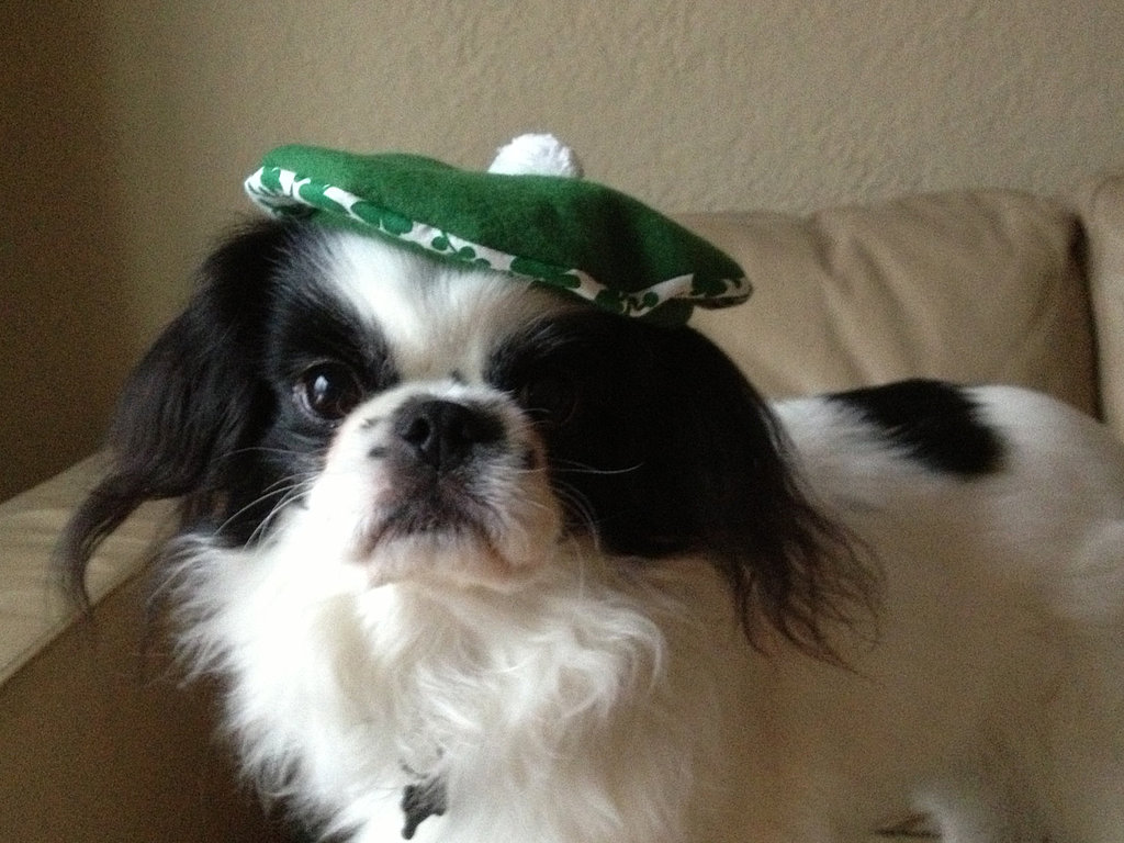 St. Patrick's Day Beret
