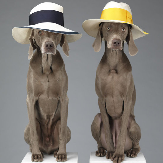 Because Dogs Make Everything More Fun: Acne Partners With Wegman