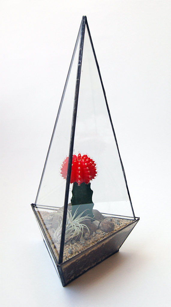 An angular glass terrarium ($98) is perfect for showcasing a blooming cacti or a pet scorpion.