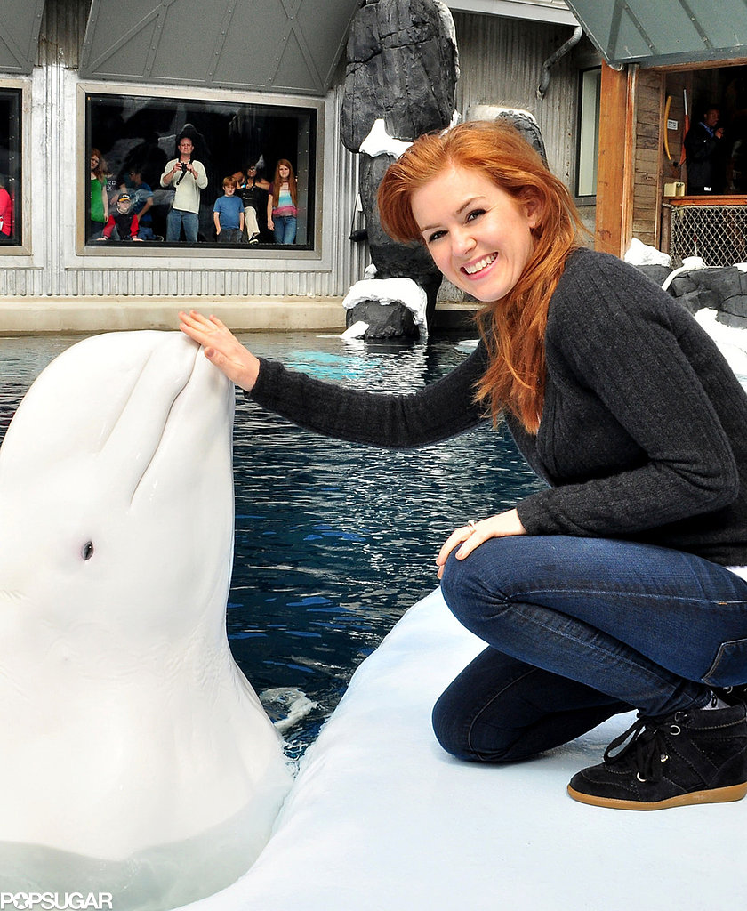 Isla Fisher pet a beluga at the San Diego SeaWorld.