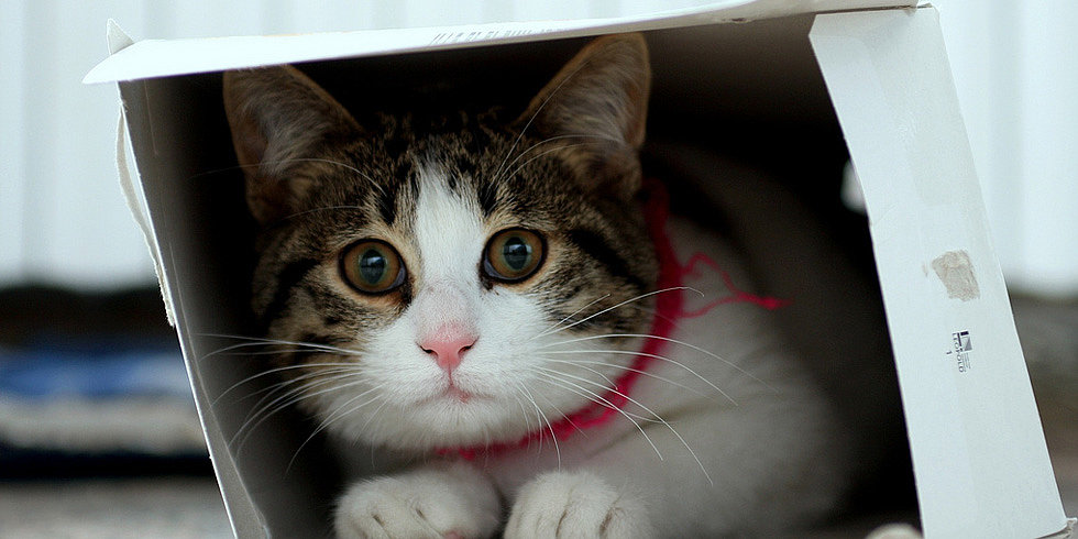 Curious Kitty: Cats Love Exploring Cardboard Boxes