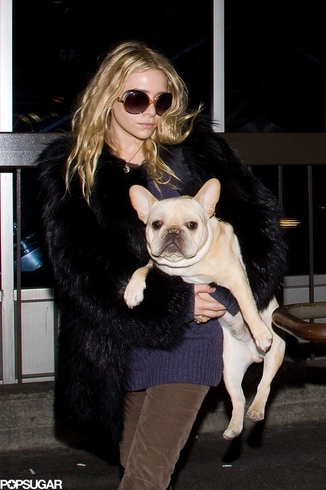Ashley Olsen made a cute LA landing in November 2011 with her French Bulldog.