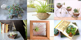 Cute Office Desk Plants and Planters From Etsy