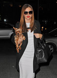 Miranda Kerr toted her precious Yorkie named Frankie in NYC in February 2013.