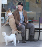 Channing Tatum's rescue pup, Lulu, and his wife Jenna Dewan's pretty pooch, Meeka, waited outside for her in Santa Barbara, CA, in February 2013.