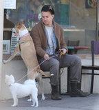 Channing Tatum's rescue pup, Lulu, and his wife Jenna Dewan's pretty pooch, Meeka, waited outside for her in Santa Barbara in February 2013.