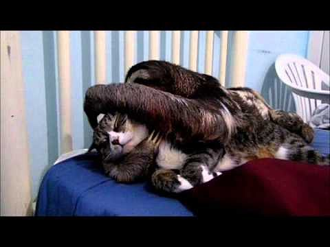 Sloth Snuggles With Cat