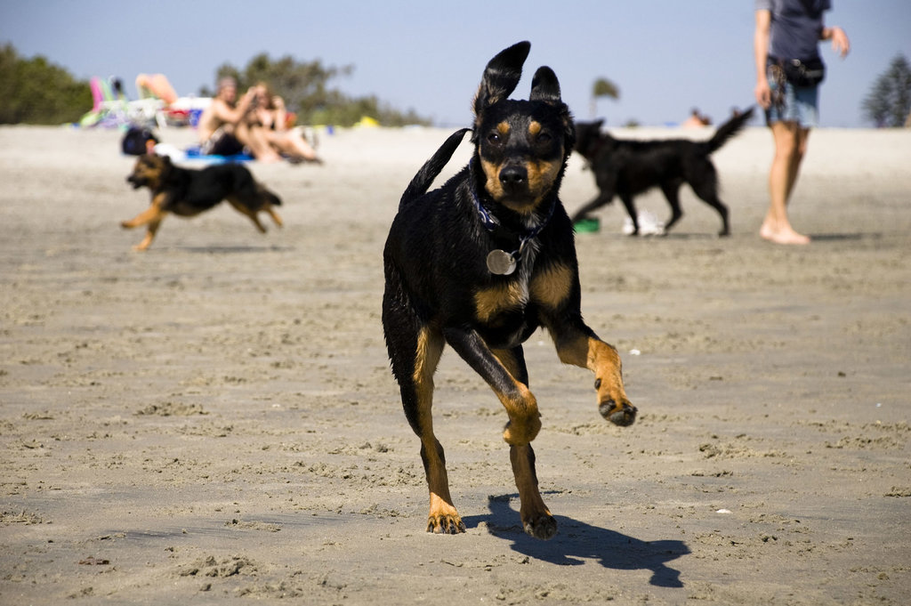 Celebrate the Unofficial Start to Summer With Beach-Lovin' Pups