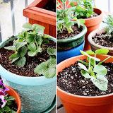 3. Plant a Garden
