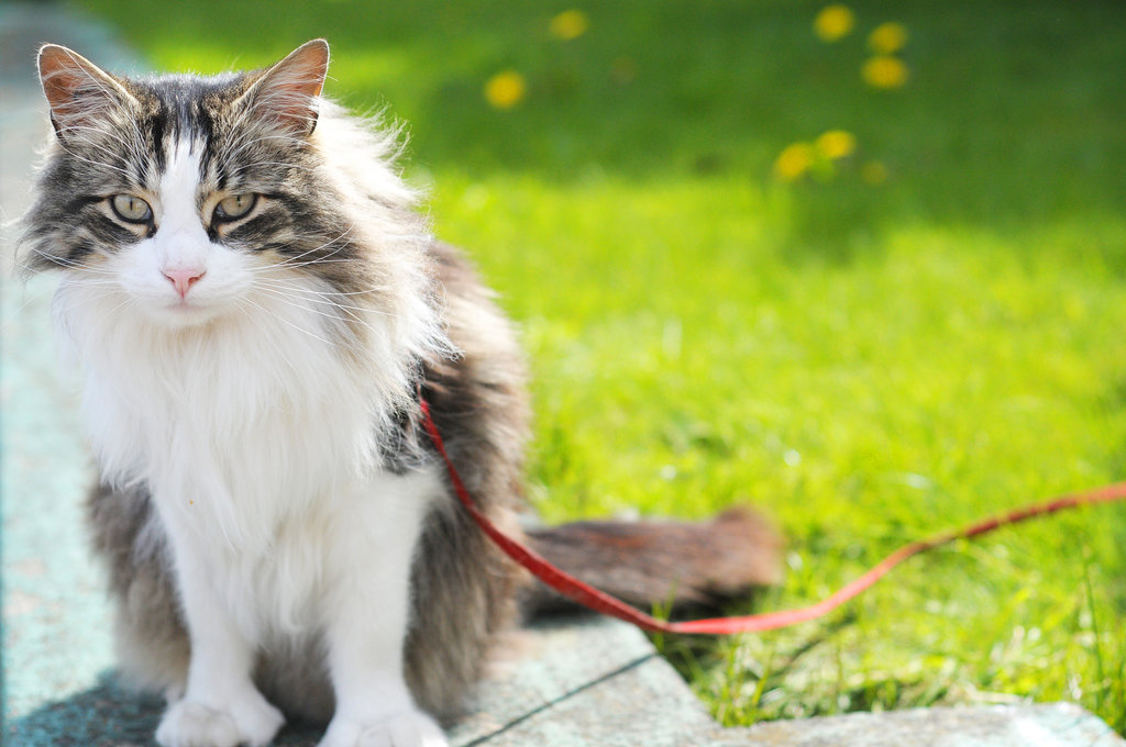Summer Fun: Cats on Leashes