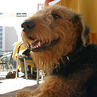 Dog Etiquette at Outdoor Cafes