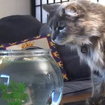Pet Video of the Week I Scaredy-Cats