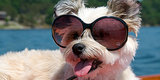 25 Supercool Dogs in Shades