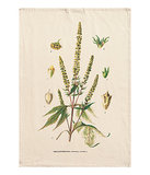 A botanical illustration graces the front of this organic cotton tea towel ($5).