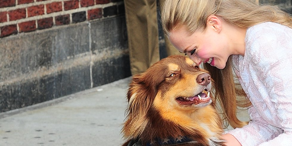 Video: Amanda Seyfried's Dog Is a Jedi Knight
