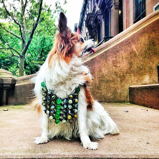 Dannijo is clearly for the dogs too. Source: Instagram user bergdorfs