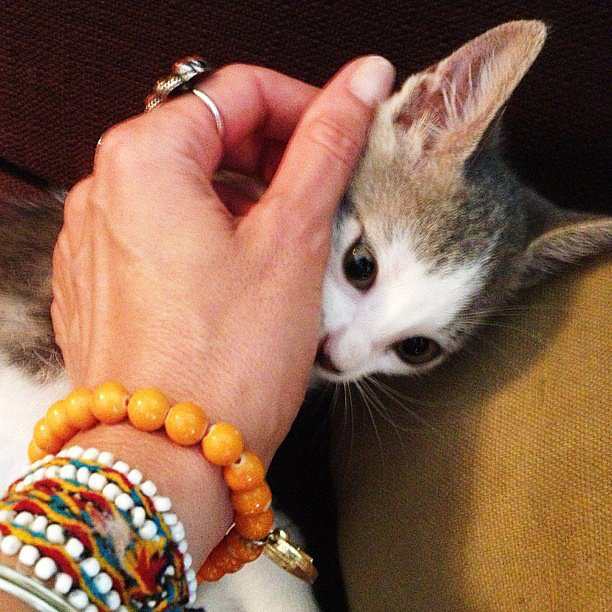Lucky cat! Source: Instagram user giseleofficial
