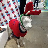 OK, how adorable is this dressed-up pup at the Old Navy holiday preview?