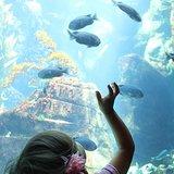 Visit an Aquarium