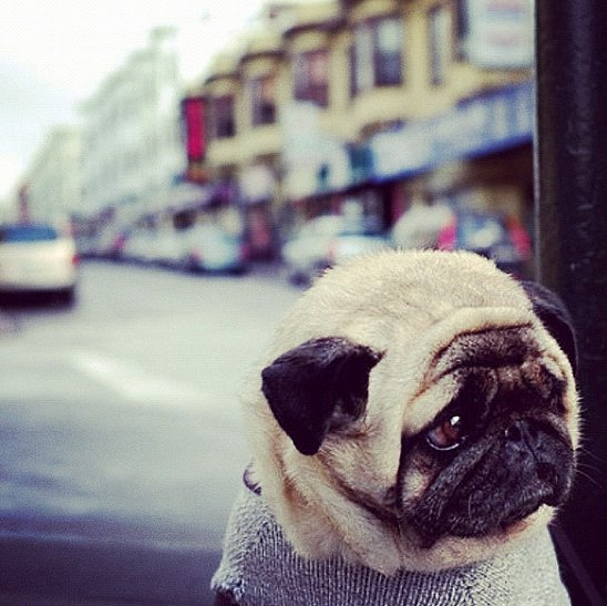 Because Coco appreciates a cute pug just as much as we do! Source: Instagram user cocorocha