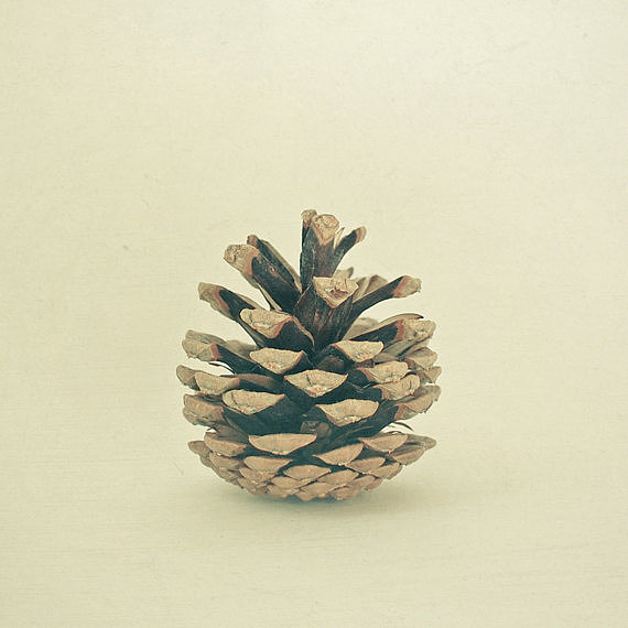 The lone pinecone in this pinecone print (from $15) feels surprisingly artsy and graphic against a seamless white background.