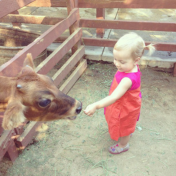 Hattie McDermott made friends with a cow at the petting zoo. Source: Instagram user torianddean