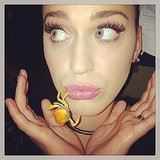 Katy Perry was feeling crabby. Source: Instagram user katyperry