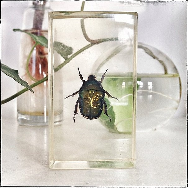 Who knew bugs could be this stylish? Source: Instagram user garancedore